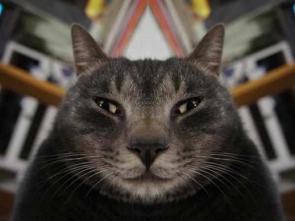 ネコの画像とかを左右対称にしたら面白かった