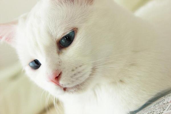 【動画あり】美猫「セツ」による驚愕の寝顔写真まとめ - いまトピェ…