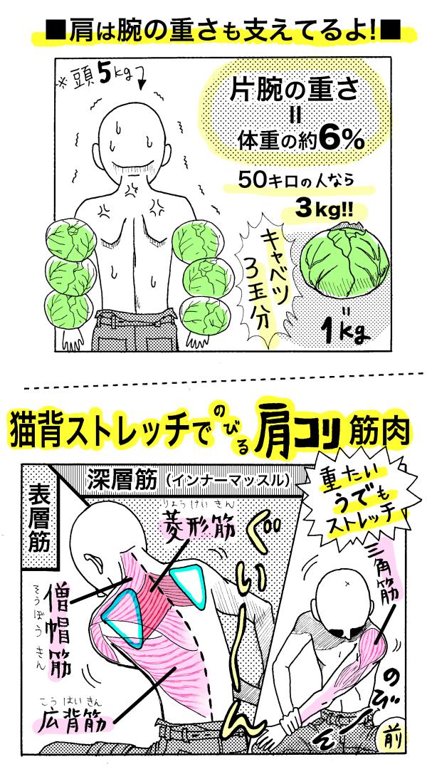 コリ 肩 甲骨