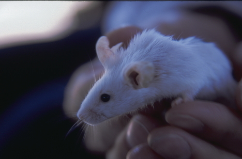 ネズミ 18