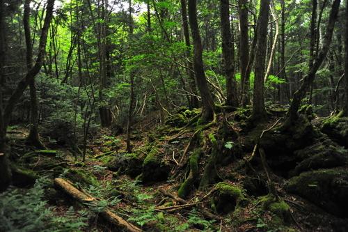 樹海 富士 の