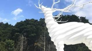 【ジメジメ東京から脱出せよ】『白い鹿』が涼しげな避暑地・宮城へ!