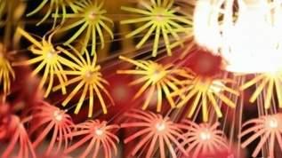 「これは綺麗や! 」「貴方だけにあがる花火なんて素敵やん」「これやっば。珈琲に浮かぶ花火電球ですって 」電球花火が素敵すぎ(1/2)