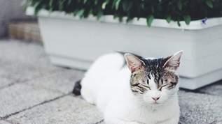 【こんなの待ってた!】「今年の夏は海辺にネコを大量発生させるぞ!」いやされると大絶賛のネコカップが話題に(1/2)
