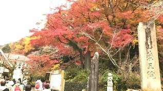 【紅葉狩り】iPhoneで紅葉をキレイに撮るための2つのコツ