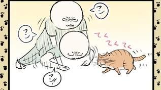 【朗報】筋トレは猫ホイホイ?