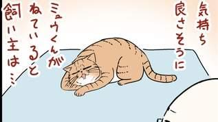 【添い寝】ネコと共に寝る自由をお許しください・・・【祈り】