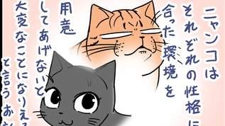 【猫の環境問題】レナがガチ怒りした時のお話【ミュウの重み】