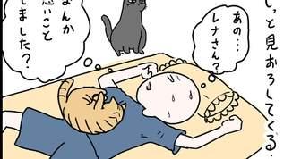 【猫の】寝てる飼い主にこんな行動をとるニャンコはいかが?【添い寝事情】