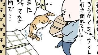 【眠れる森の猫?】部屋の片づけ中にジャマなので猫どかしてみた。