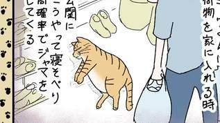 【ニャンコ!】玄関で関所をこさえる飼い猫の話