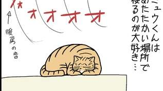【ネコマンガ】飼い主と飼い猫の化かしあい?猫は○○に反応するんです!