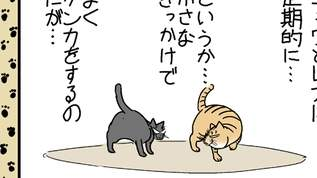 【猫の日常?】争う2匹を目にすると・・・【飼い主の悲哀】