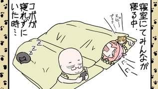 【猫とウサ子さん】深夜に起きてないと見れなかった衝撃の展開!?