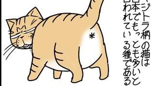 【うちの猫の柄!】キジトラは飼い猫の起源なのか!?