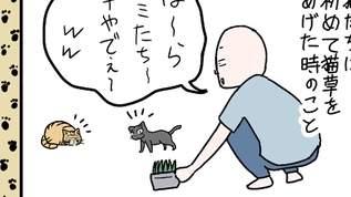 【ネコのマンガ】猫たちに初めて猫草をやった時の話