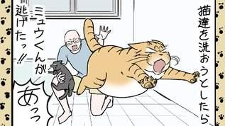 【ネコ洗いの季節!】我が家でもドタバタと猫洗いが行なわれて・・・