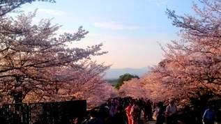 この〇〇に見覚えがねえとは言わせない!?…「ファンシー絵みやげ」で振り返る桜の季節(1/2)