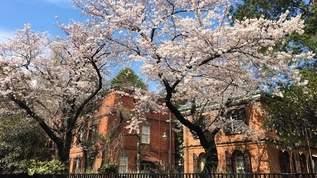 美術館でお花見も!この春に見たい東京+αの展覧会10選