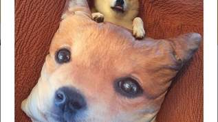 【即買い】犬好きなら欲しくなる!しまむらの可愛すぎる柴犬クッション