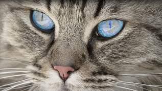 絶妙な植物感で「猫草」化した子も サマーカットされたサマカ猫さんまとめ