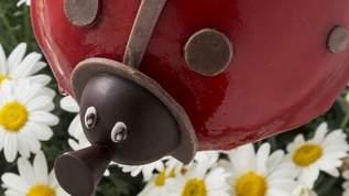 【絶品グルメ】贈り物に♪しあわせを運ぶ「てんとう虫」のアイスケーキ