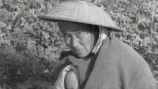 【昭和30年】極貧だった奄美大島がたった2年で驚くほど激変していた