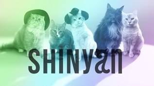 モフモフの猫5匹組グループがデビュー!「SHINyan」ってなんだにゃん?