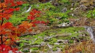 【紅葉も見頃】関東のコケの秘境「チャツボミゴケ公園」が唯一無二の絶景でブレイク寸前!