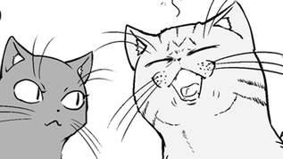 【新連載】第1回「猫との暮らしは幸せと癒し、そして・・・」