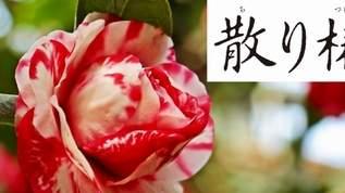 """【いよいよ公開!】岡田准一の主演作、映画「散り椿」に登場する""""国宝""""って?"""
