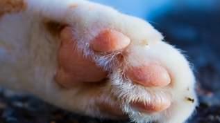 犬猫の「肉球拓」を取って飾れるグッズがめちゃカワだと話題!→ネット民「可愛すぎ」「生きてるうちに知りたかった」の声