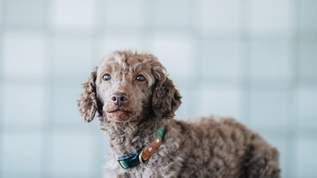 保護された子犬、元の飼い主が手放した「とんでもない理由」に驚愕→ネット民「ひどい、許せん」「動物を舐めすぎ」