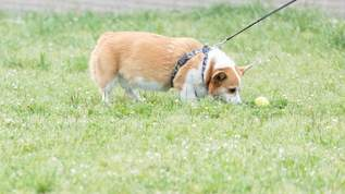 犬にわざと噛ませて慰謝料を請求してくる「噛まれ屋」なる詐欺グループが横行…→ネット民「怖いですね」