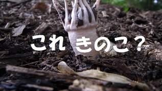 ゴールデンウイーク穴場情報!きのこライターに訊く「京都きのこスポット」
