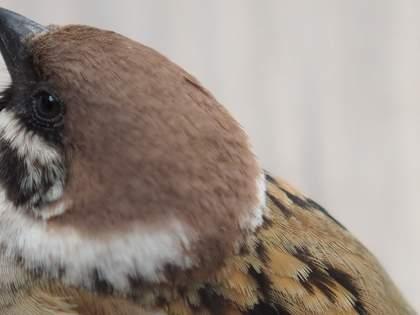 かわいい小鳥だって食って〇〇して寝る。作者不詳の屛風が伝える自然とは?