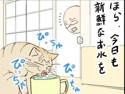 【猫と】ネコは新鮮なお水が大好き!だから油断していると・・・【共有!?】