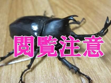 【閲覧注意】カブトムシを超高速で動かしたらゴキブリみたいに気持ち悪くなるのか