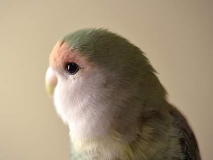 動物は家族。愛鳥の老いと向きあう話題の写真集「インコのおとちゃん それから これから」